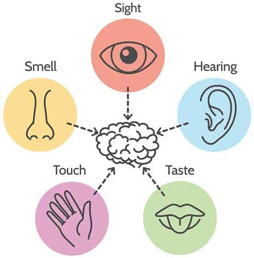9_1603.m00.i121.n057.F.c06.254825224 _gtp_ Five senses line icon